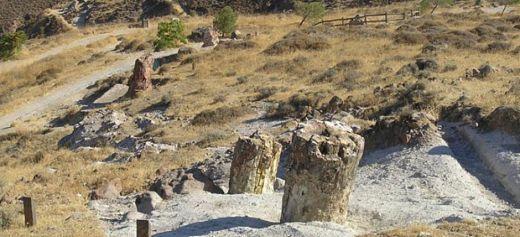 Το Απολιθωμένο Δάσος της Λέσβου στα Μνημεία Παγκόσμιας Κληρονομιάς της UNESCO