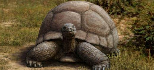 Έλληνας επιστήμονας ανακάλυψε νέο είδος γιγάντιας χελώνας