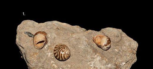Μουσείο σπάνιων απολιθωμάτων και πετρωμάτων στην Κω από 19χρονο φοιτητή