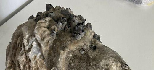 Ρωμαϊκή κεφαλή ανασύρθηκε από θαλάσσια περιοχή της Πρέβεζας