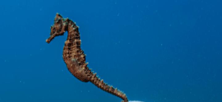 Ocean Photography Awards: