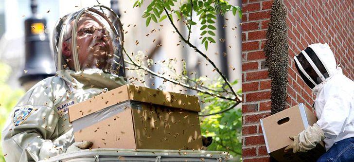 Προστατεύει τη Νέα Υόρκη από τις μέλισσες