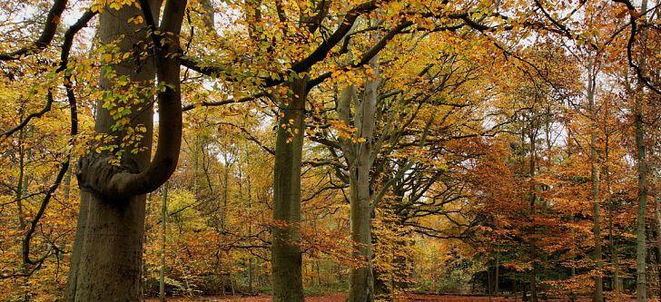 Οι 10 πιο γραφικοί φθινοπωρινοί προορισμοί