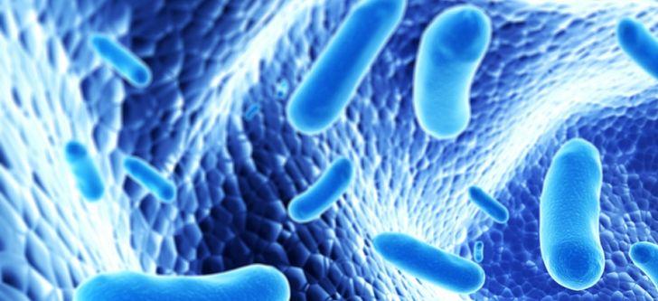 Study finds probiotics control hepatocellular carcinoma