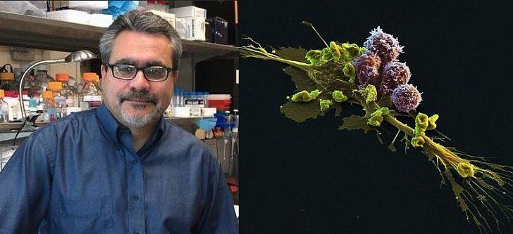 Ο ερευνητής της βιολογίας του καρκίνου με στόχο τη θεραπεία του