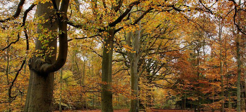 Ten most scenic autumn destinations