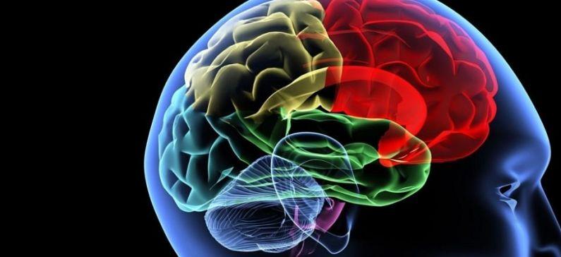 Αποκωδικοποιεί τις σχέσεις μεταξύ των περιοχών του εγκεφάλου