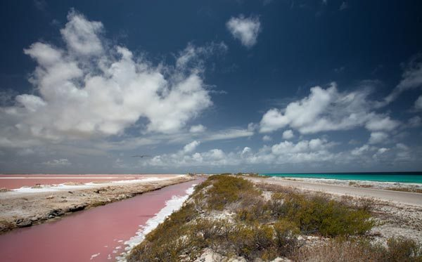 Bonaire Pink Beach – Dutch Caribbean Island