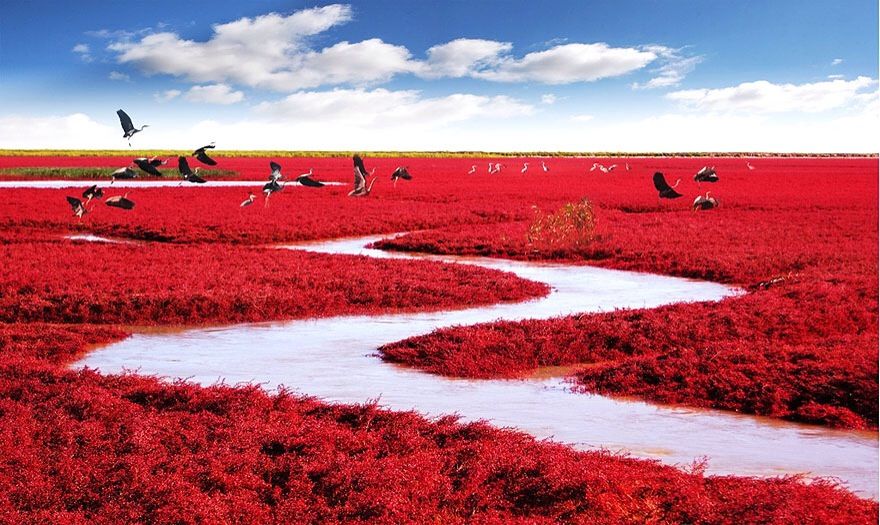 Red Beach, Panjin — China